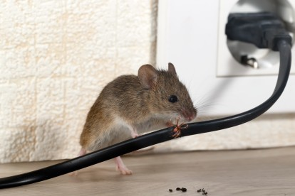 Pest Control in Bromley, Bickley, Downham, BR1. Call Now! 020 8166 9746