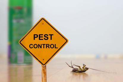 Pest Contol in Bromley, Bickley, Downham, BR1. Call Now 020 8166 9746