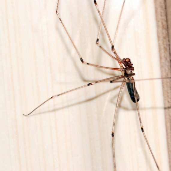Spiders, Pest Control in Bromley, Bickley, Downham, BR1. Call Now! 020 8166 9746